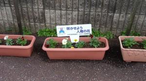 土佐市人権の花